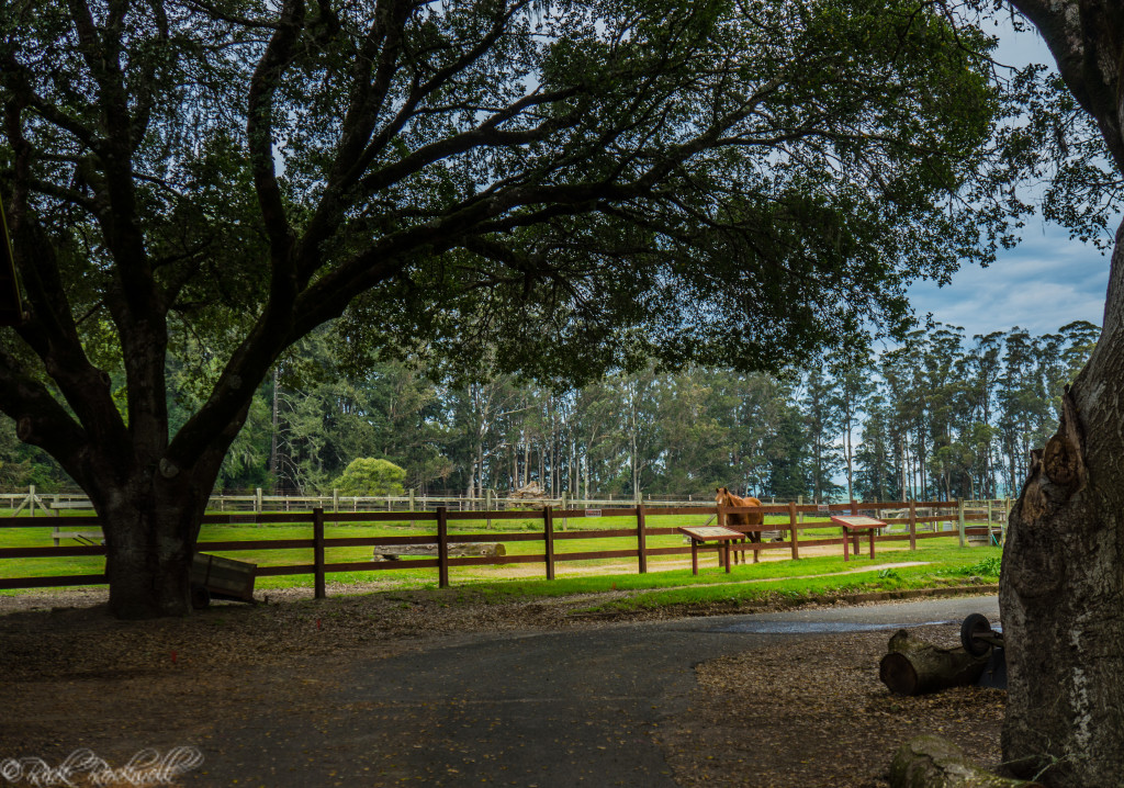 Morgan Horse Ranch