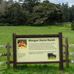 morgan horse ranch 2 (1 of 1)