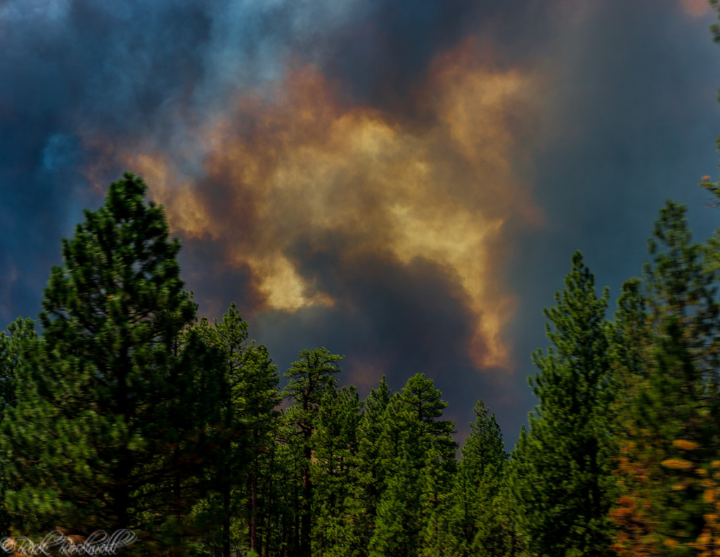 california fire essay It comes as california braces for a potentially bad fire season, particularly in the southern sierra where precipitation was half its normal level.