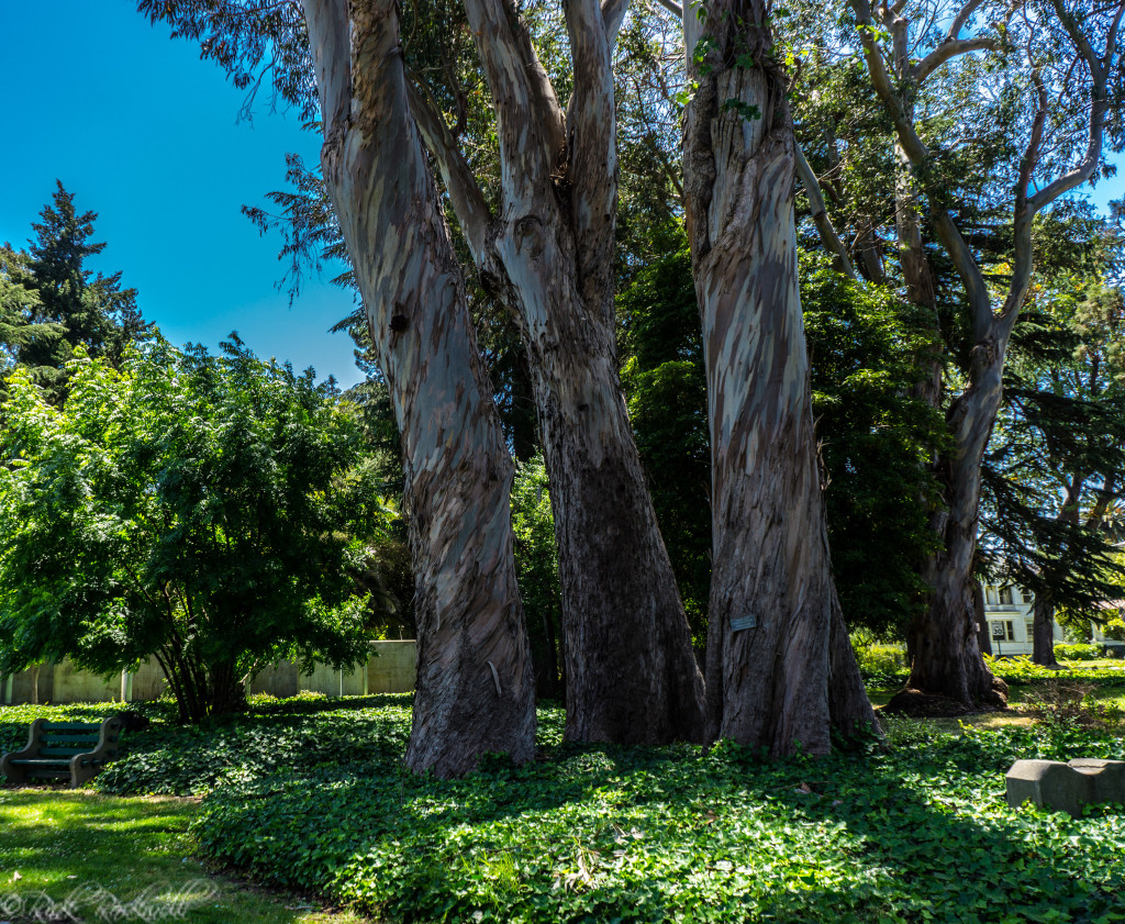 alden park trees (1 of 1)