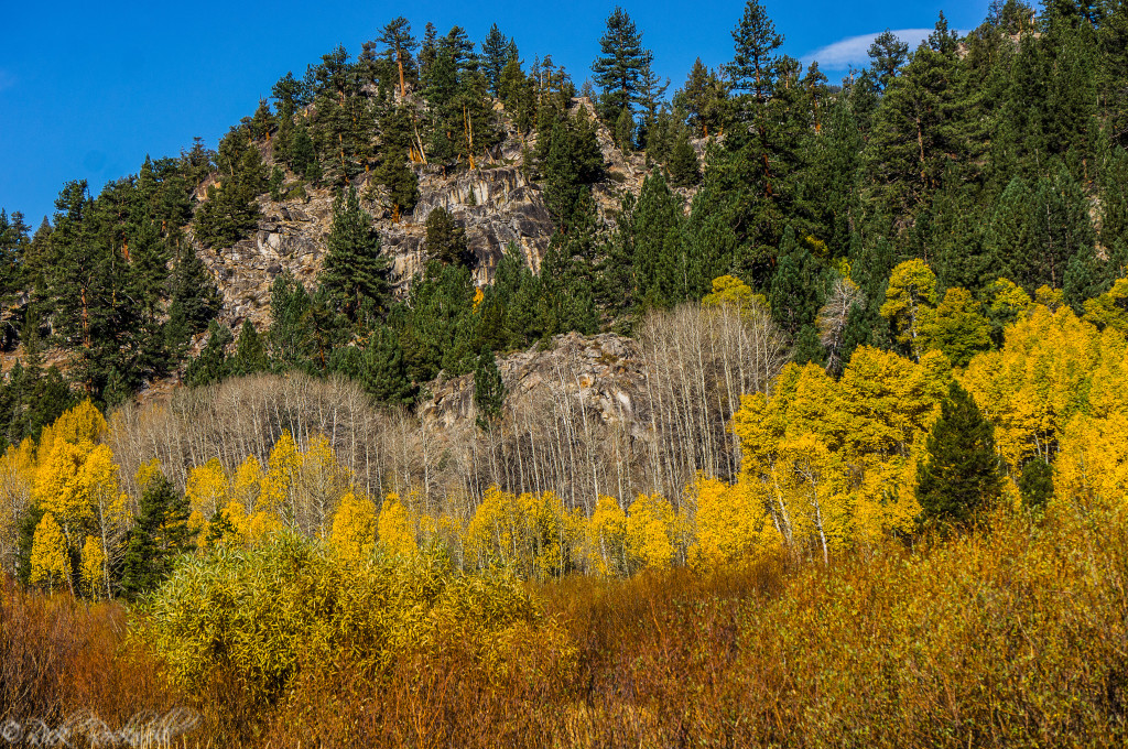 fall colors 2 (1 of 1)