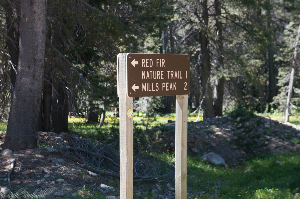 millspeak lookout road sign (1 of 1)