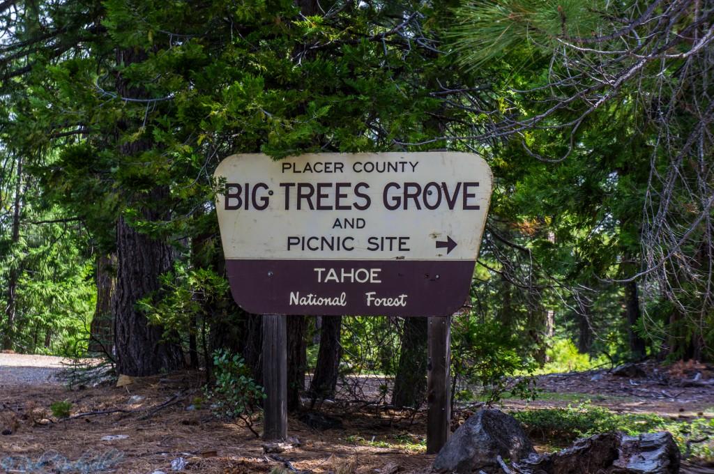 big tree grove sign 1 (1 of 1)