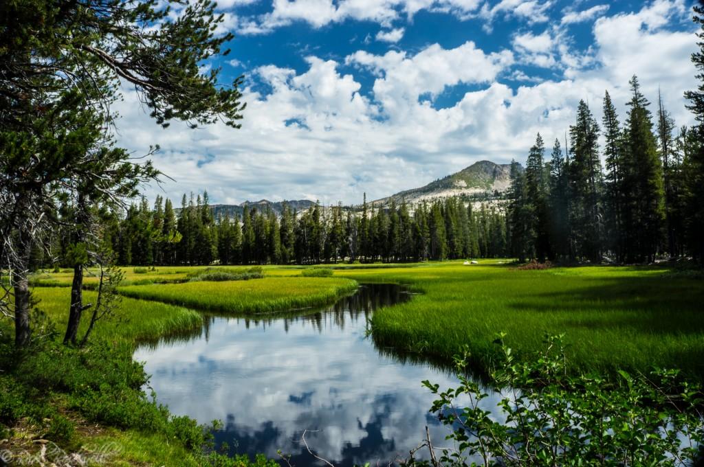 Wrights Lake Meadow