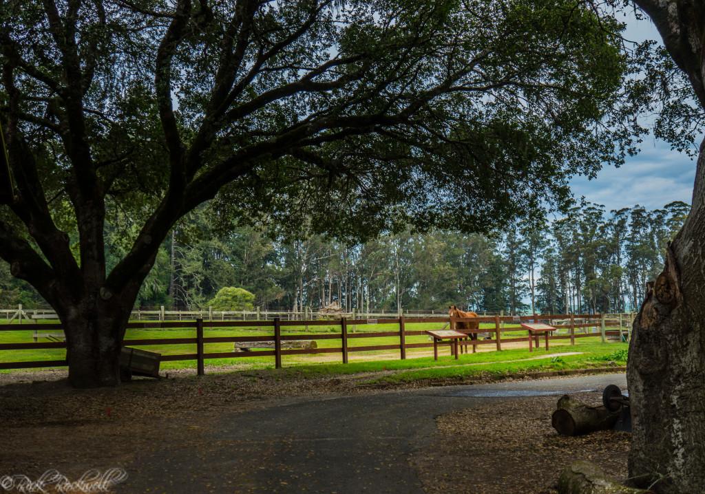 Morgan Horse Ranch