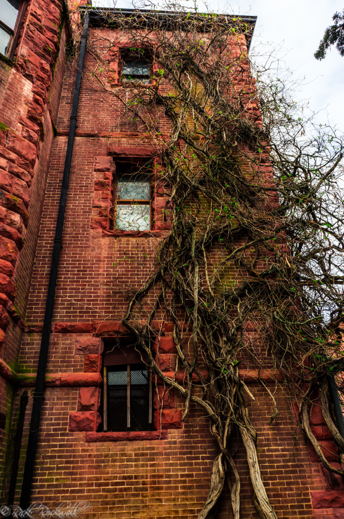 preston castle vines (1 of 1)