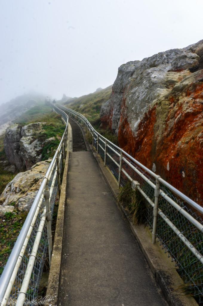 pt reyes stairs halfway (1 of 1)