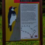 woodpecker trail (1 of 1)