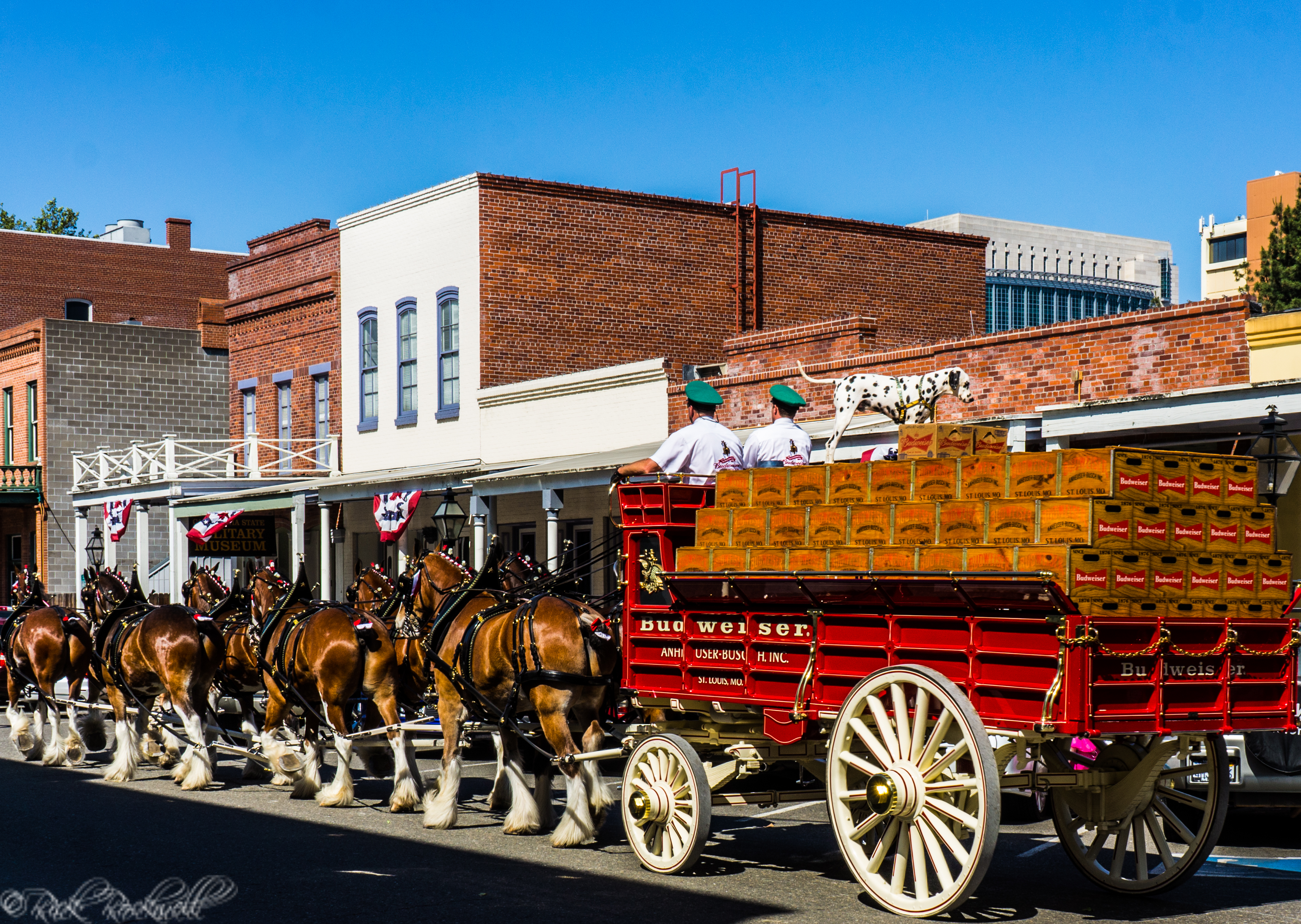 Photo of Photo Essay: The world famous Budweiser Clydesdales