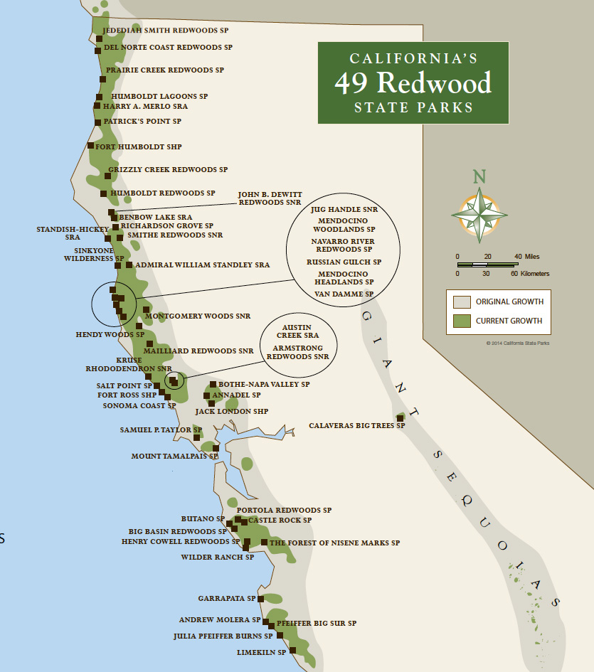 Photo of Skip Black Friday and explore California's Redwood State Parks for Free